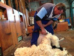 Wool-Carding-FP-20