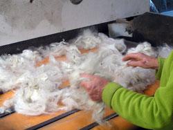 Wool-Carding-FP-4